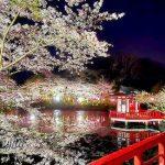 茂原公園や豊田川での花見は夜桜が美しい