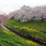 茂原公園周辺で花見しながらランチできる店は?